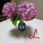 紫陽花と紅白ののし袋